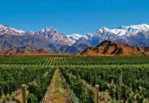 Cata de vino: Siesta en el Tahuantinsuyu. Hace unos cuantos meses, un gran amigo viajó unos días a Mendoza y me trajo un regalo especial.